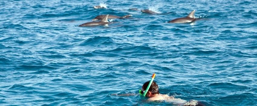dolphin-01.jpg