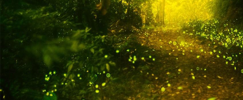 반딧불이 사진-850.jpg